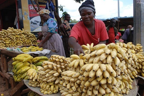 Kisii Sweet bananas