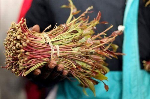 Fresh Miraa stalks and leaves